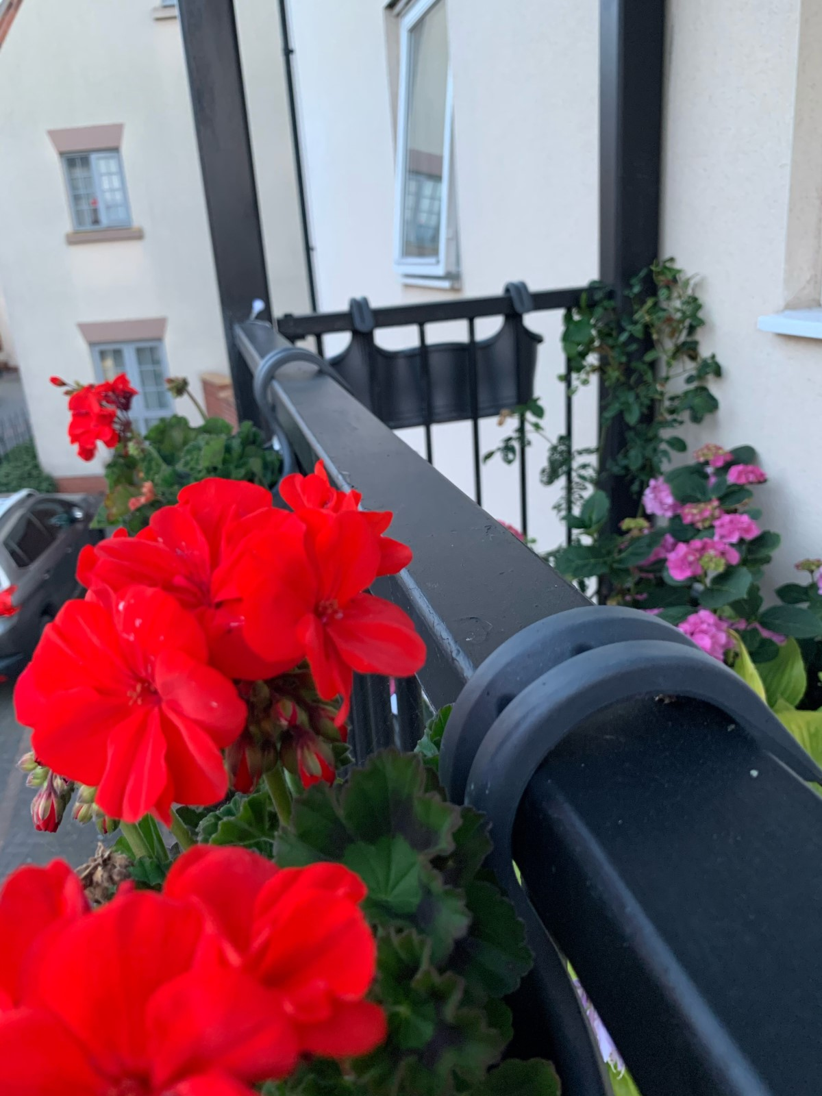 A close-up photograph of the dark grey metal railing of a balcony, with red flowers hanging off it in the foreground, and some pink flowers resting on the balcony in the background.