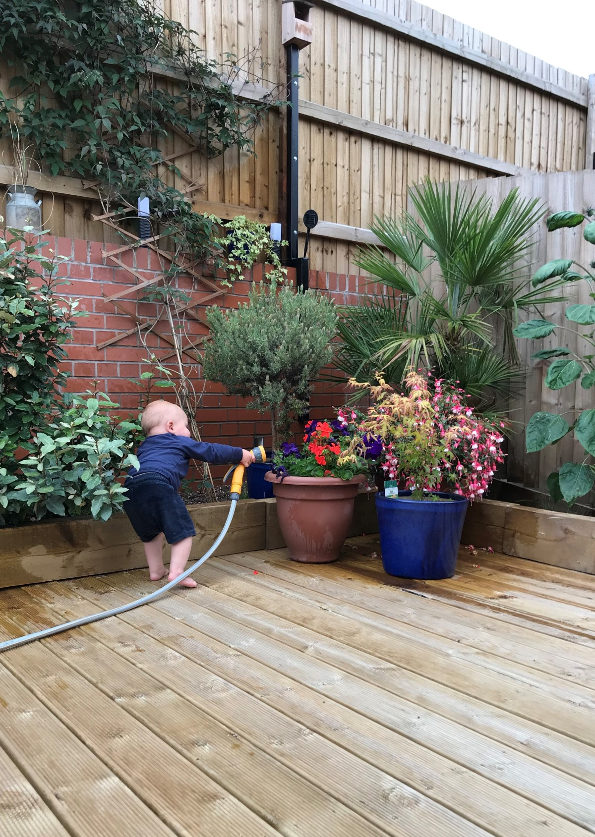 A photograph of Ruben, a baby boy, standing on wooden decking and aiming a hosepipe over some potted plants.