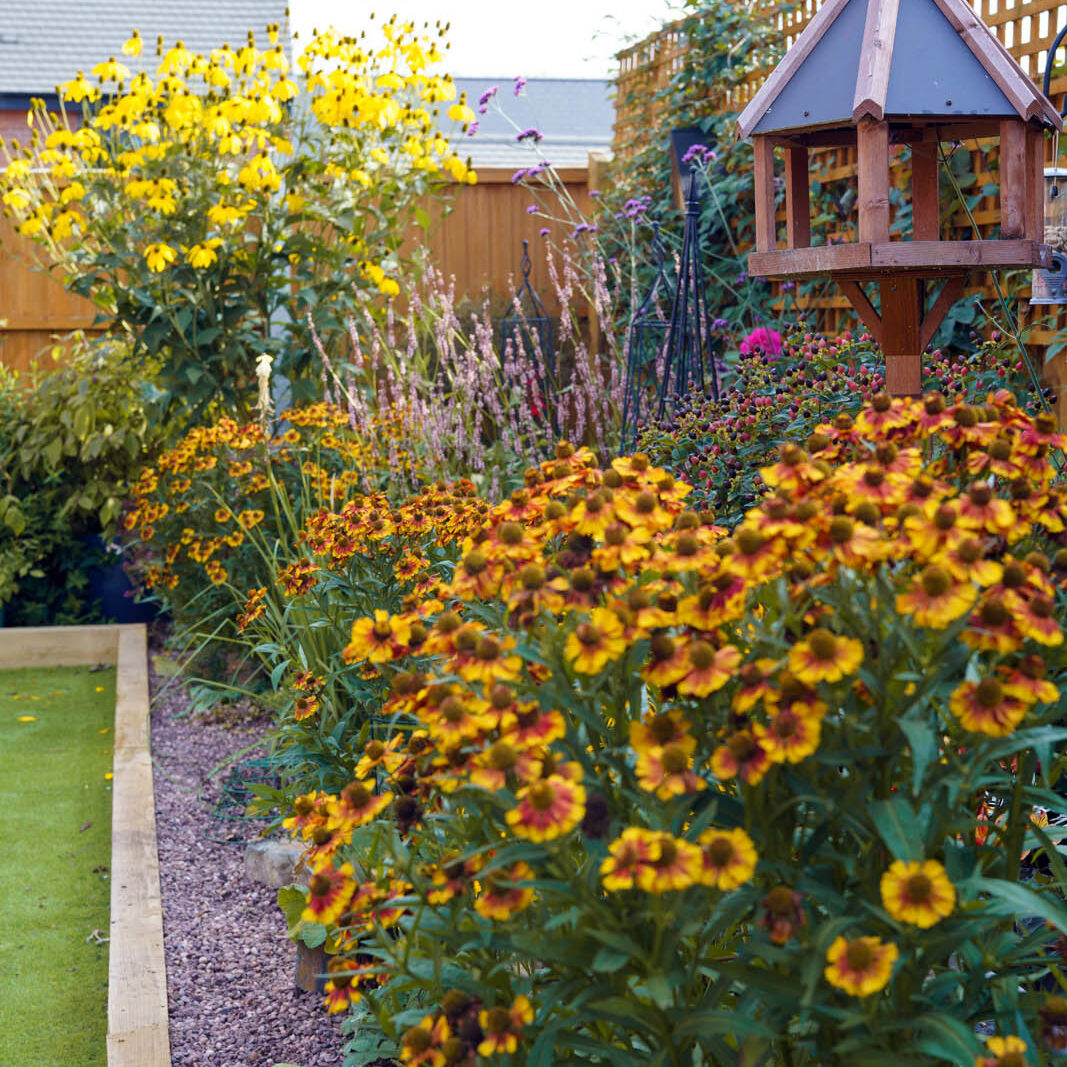 A photograph of a garden, with a lawn on the left and dense, orange flowers on the right.
