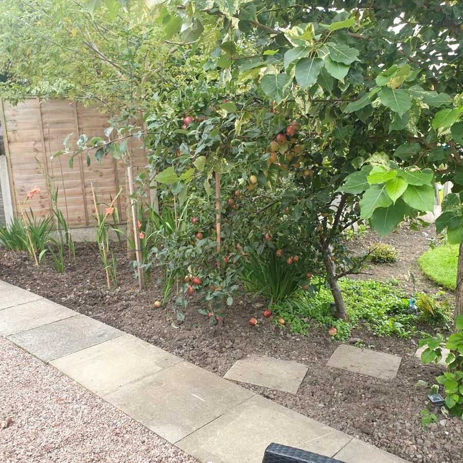 A gravel area edged with paving stones, with some fruit plants in the soil beyond.
