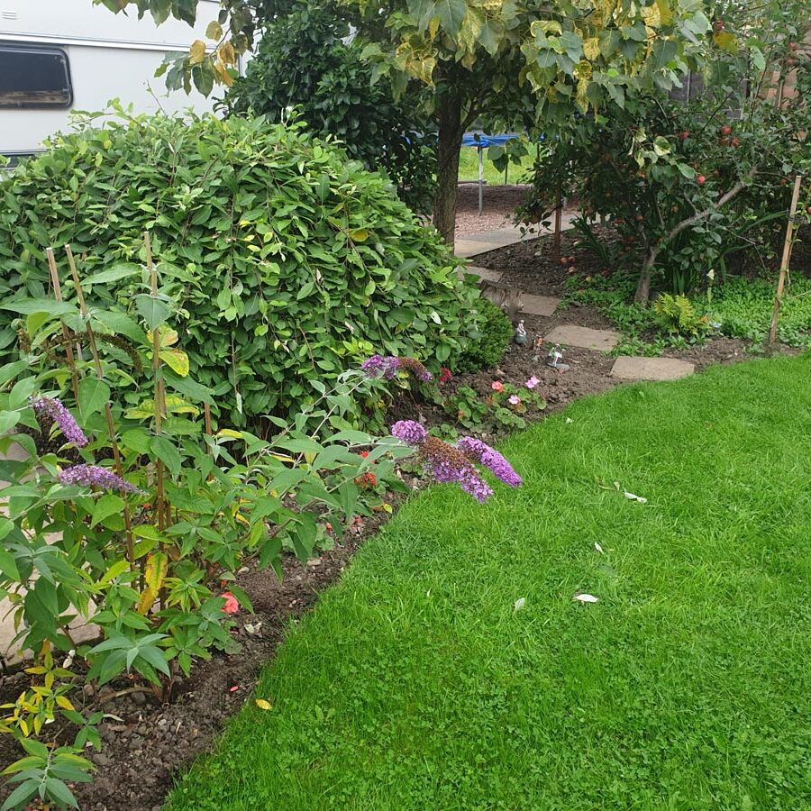 A freshly-cut lawn with some soil and plants running along the side.