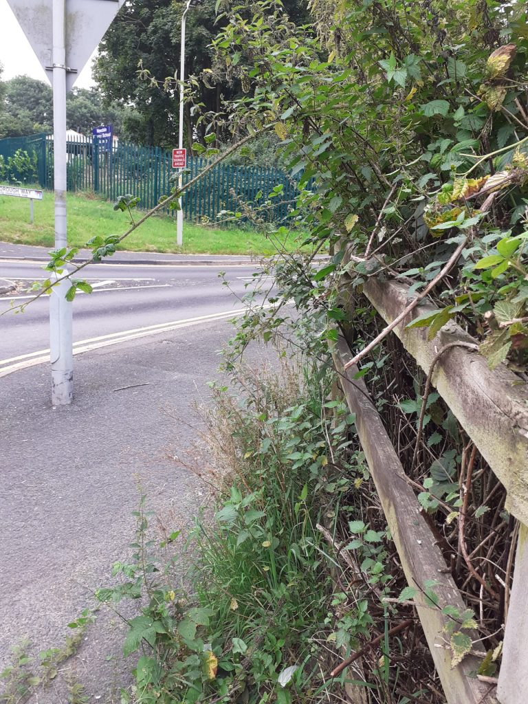 A footpath near a road, with nettles and other shrubs reaching across it through a wooden fence.