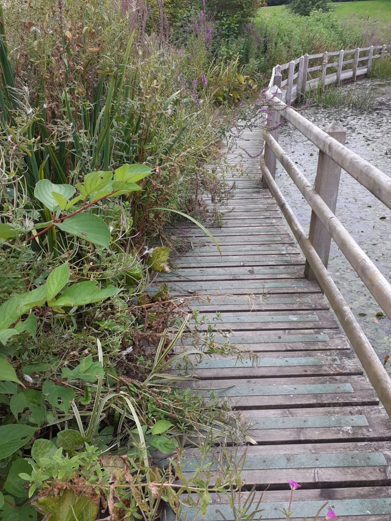 A photo of some decking along a pond, with overgrown bushes covering parts of it.